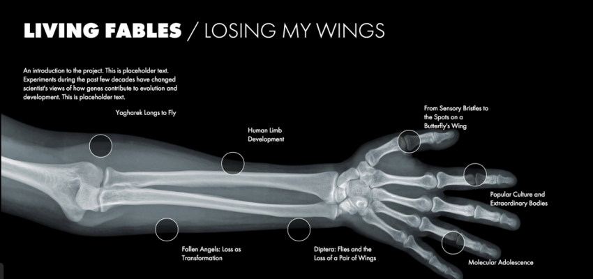 Living Fables / Losing My Wings
