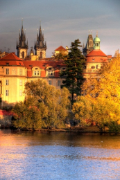 Trees by river in Prague
