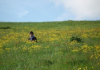 Student in field of flowers in Iceland
